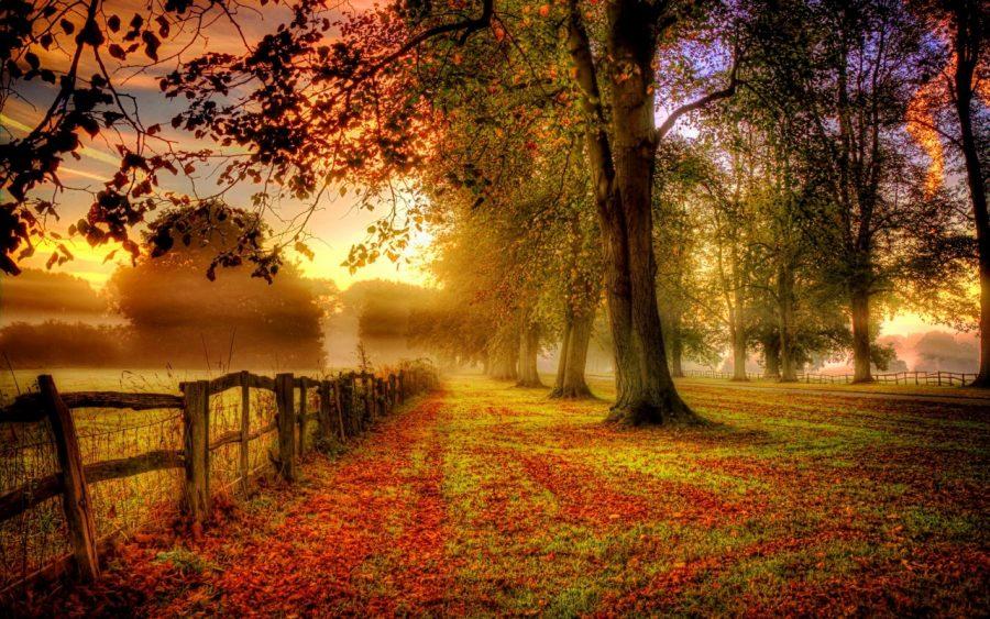 Fall in bloom